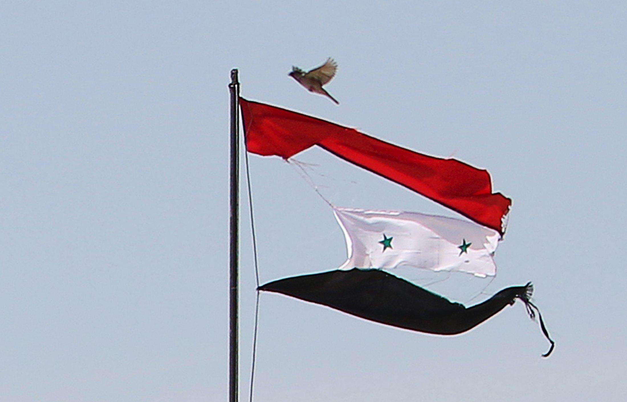 A bird flies near a torn Syrian national flag in the city of Qamishli