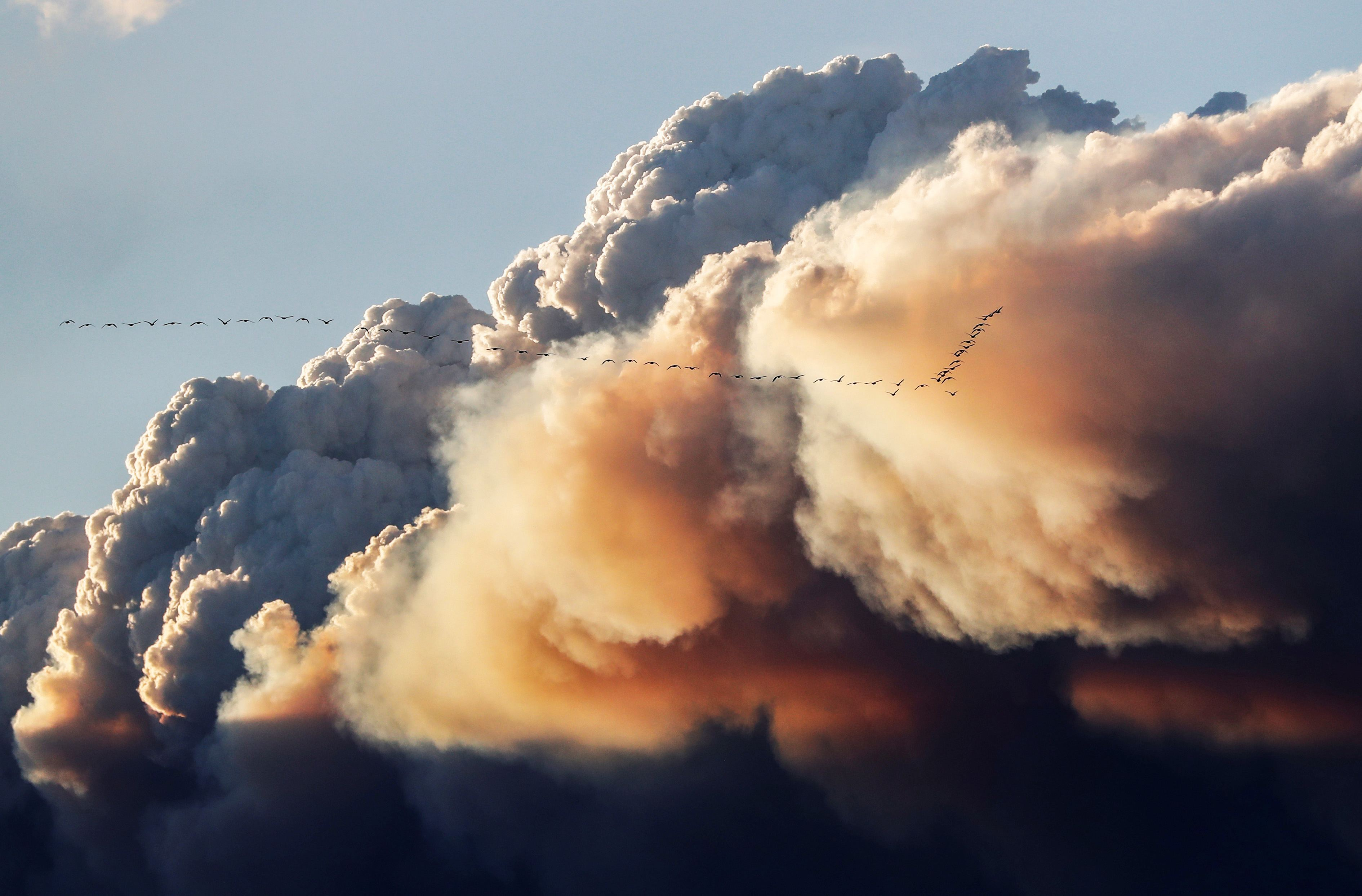 A flock of birds fly as smoke billows from the Fort McMurray wildfires in Kinosis