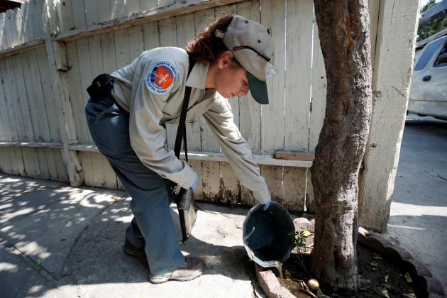 A Greater Los Angeles County Vector Control District worker pours away stagnant water as she searches for mosquitoes in a backyard