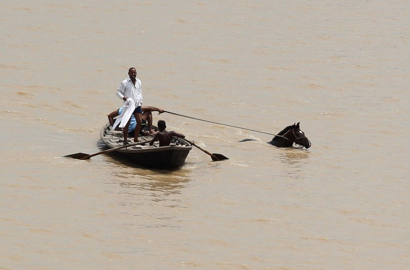 A man rows a boat as they pull out a horse from the flooded river Ganga in Allahabad