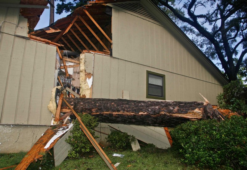 A huge pine tree is shown after falling through a home from the wind and rain damage of Hurricane Hermine in Tallahassee, Florida
