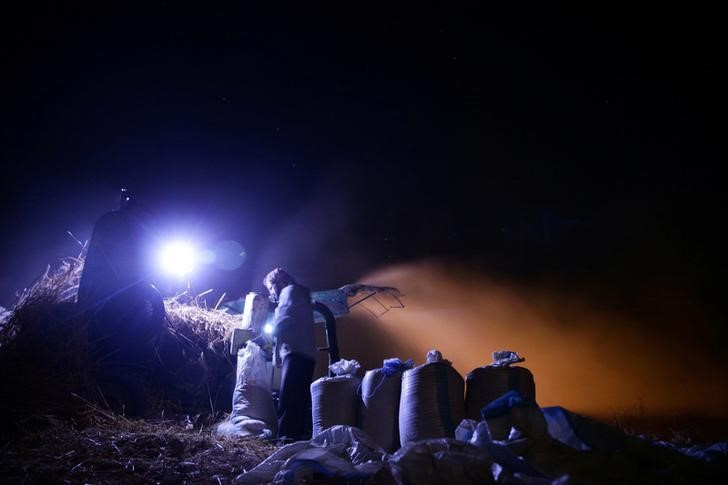 Farmers harvest wheat in a field at night, fearing shelling in daylight, in the rebel held besieged town of Douma, eastern Ghouta in Damascus, Syria early morning