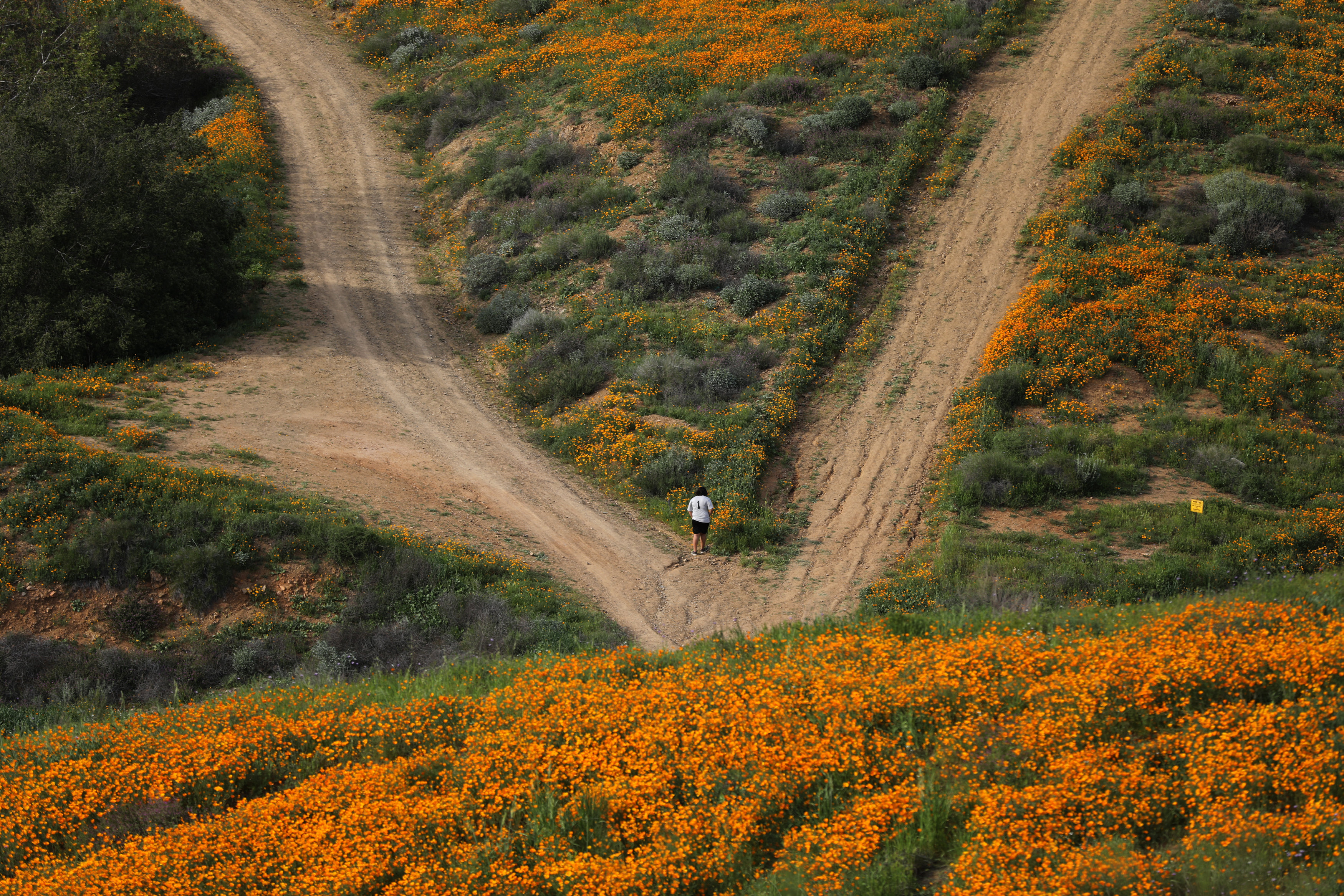 A massive spring wildflower bloom caused by a wet winter is seen in Lake Elsinore, California, U.S., March 14, 2017. REUTERS/Lucy Nicholson