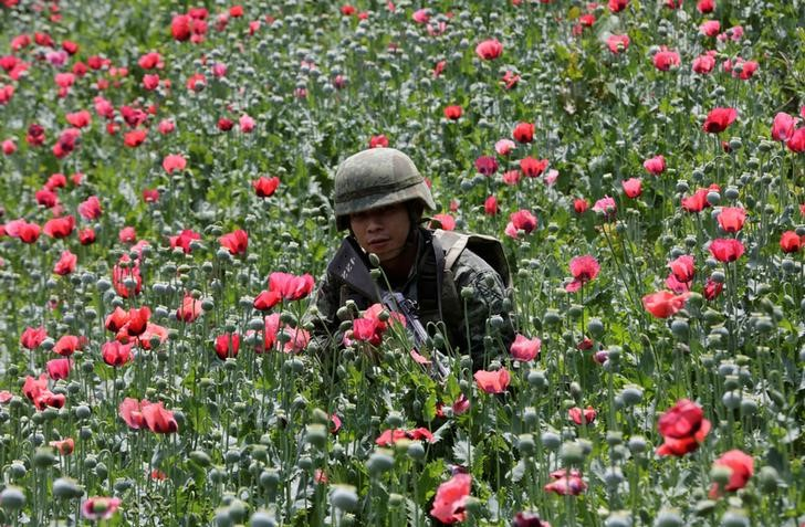 A soldier walks among poppy plants before a poppy field is destroyed during a military operation in the municipality of Coyuca de Catalan, Mexico