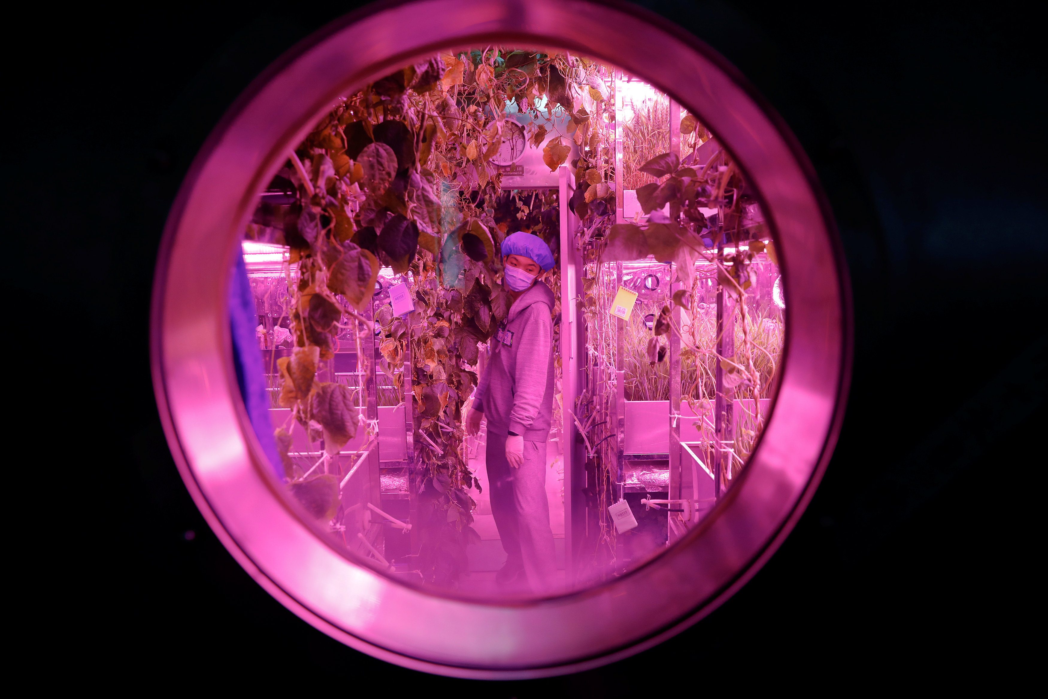 A volunteer checks on plants inside a simulated space cabin in which he temporarily lives with others as a part of the scientistic Lunar Palace 365 Project, at Beihang University in Beijing, China