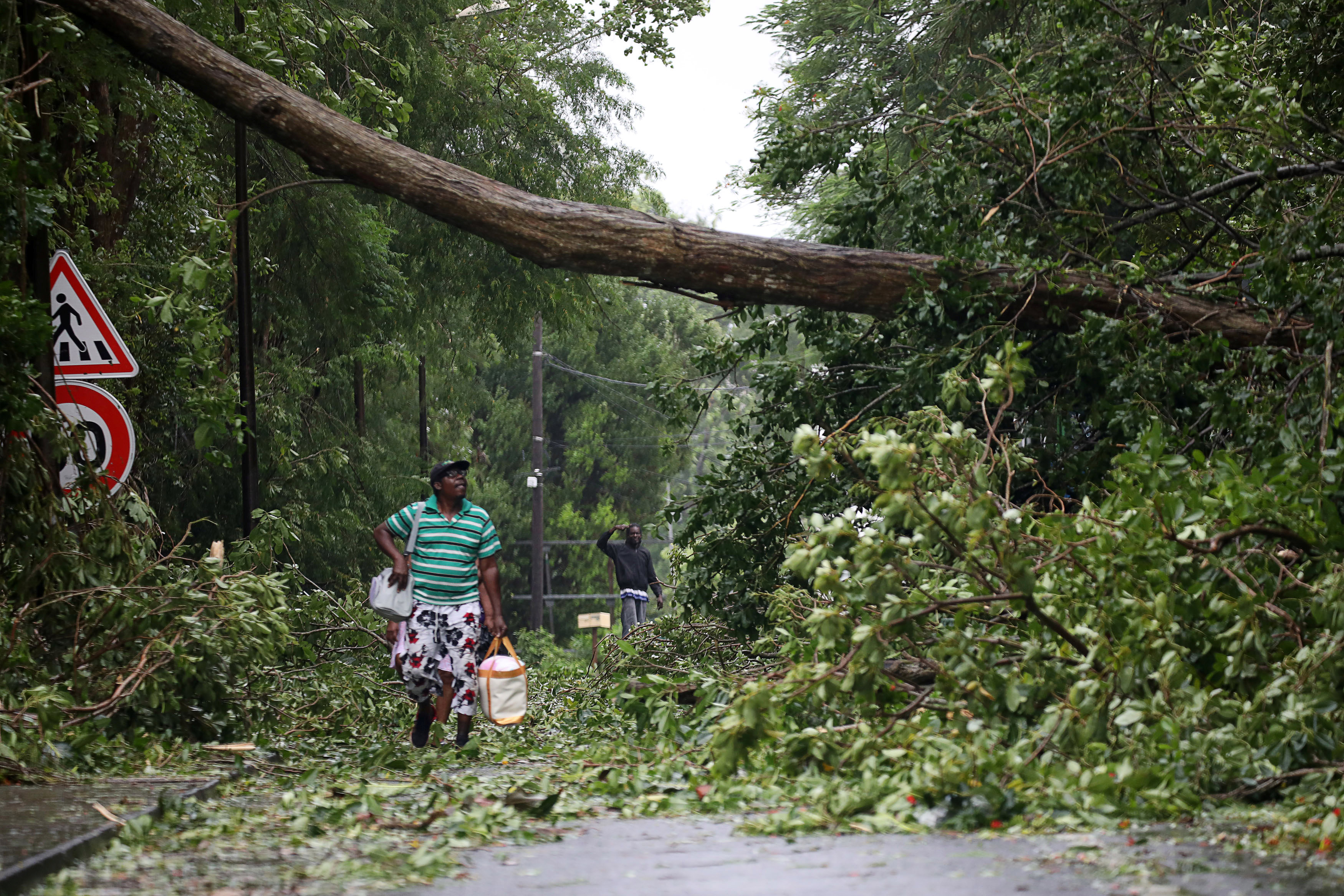 A man looks at a fallen tree as he walks along a street after the passage of Hurricane Maria in Pointe-a-Pitre, Guadeloupe island, France, September 19, 2017. REUTERS/Andres Martinez Casares