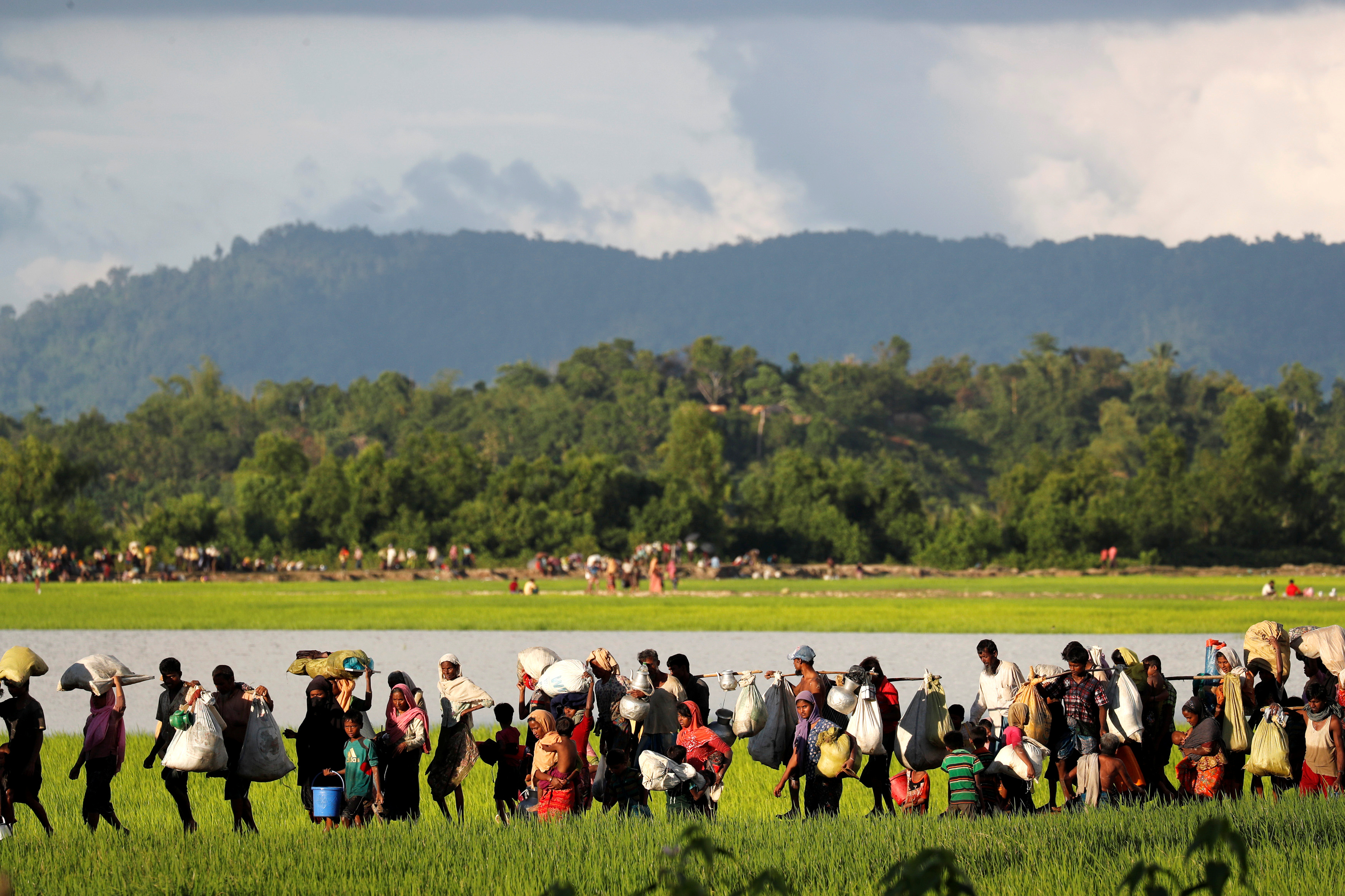 Rohingya refugees, who arrived from Myanmar last night, walk in a rice field after crossing the border in Palang Khali near Cox's Bazaar, Bangladesh
