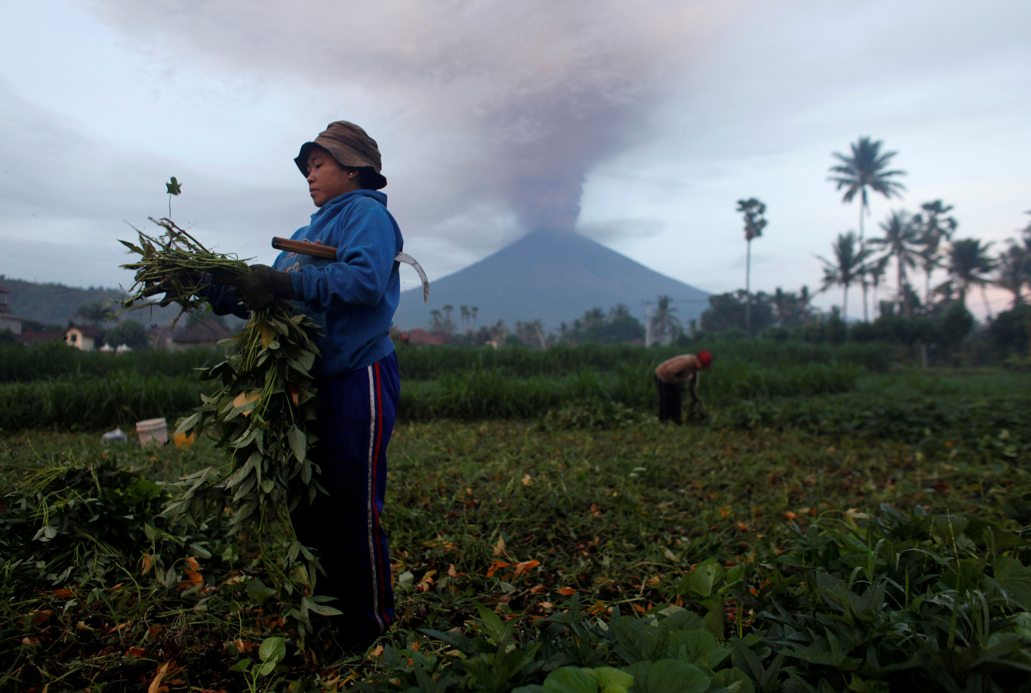Farmers tend their crops as Mount Agung erupts in the background in Amed, Karangasem Regency, Bali, Indonesia, November 27, 2017