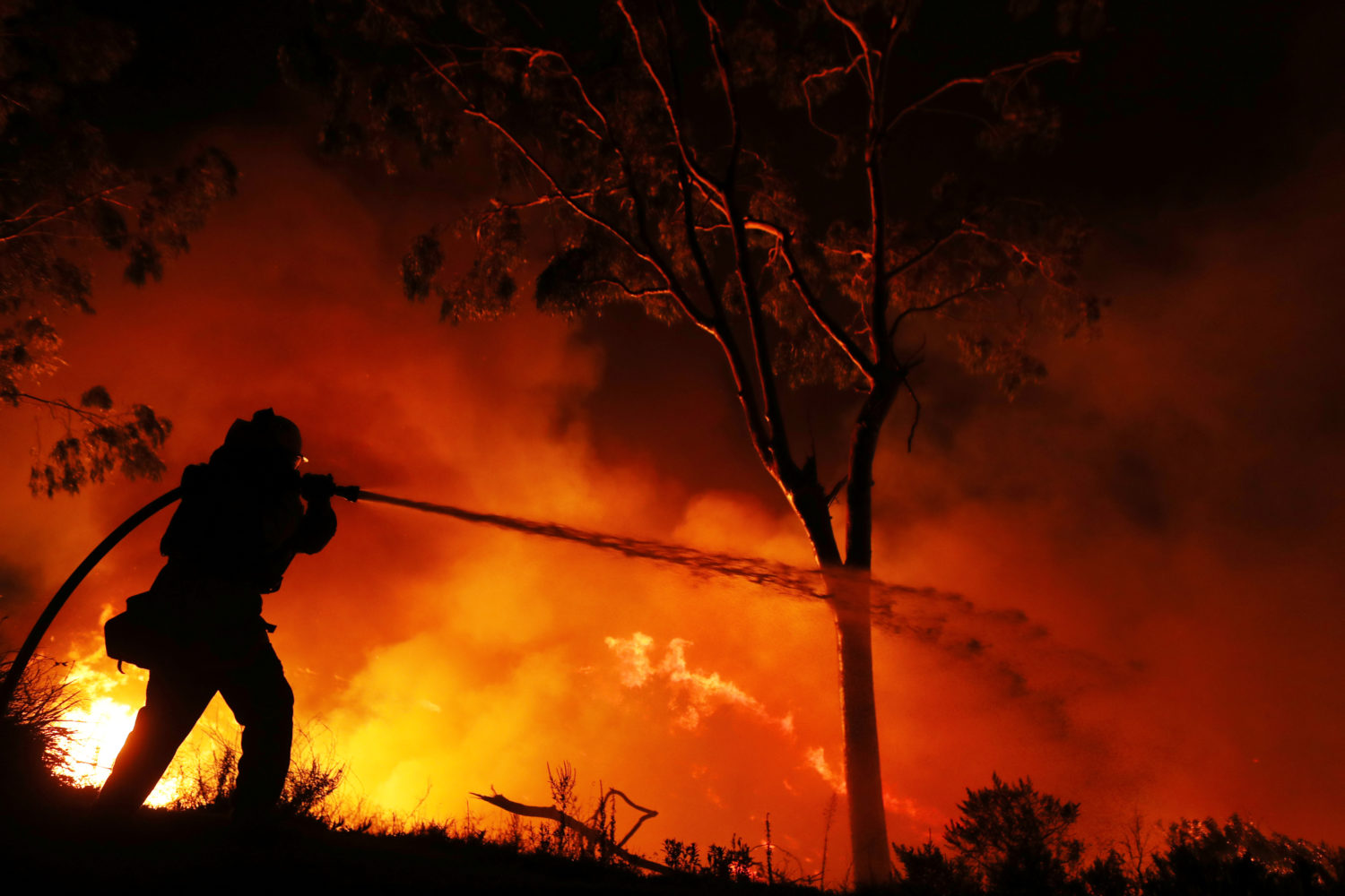 A firefighter is working on extinguishing the Lilac Fire, a fast moving wildfire in Bonsall.