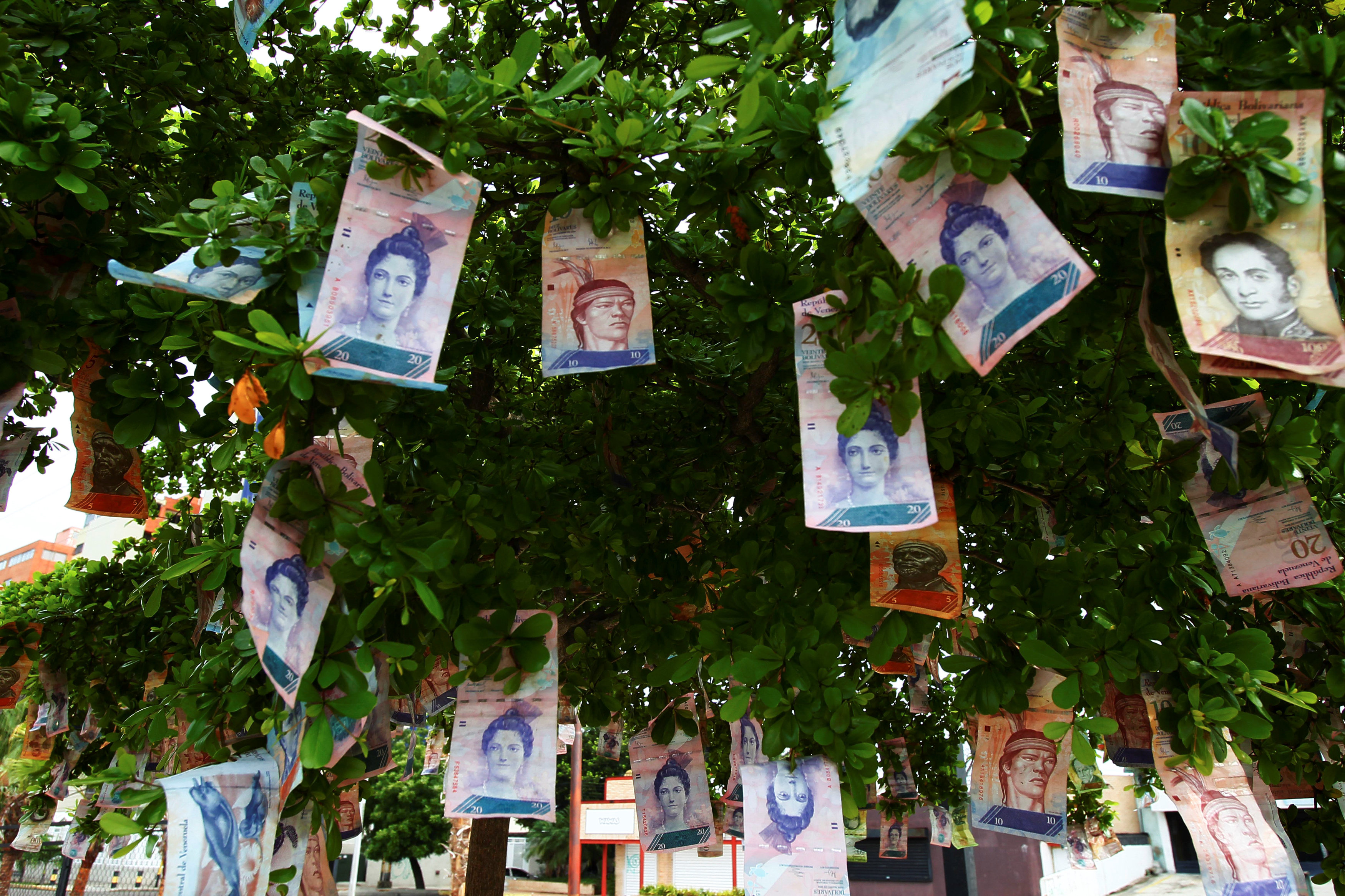 Bolivar notes a seen hanging in a tree at a street in Maracaibo, Venezuela November 11, 2017.