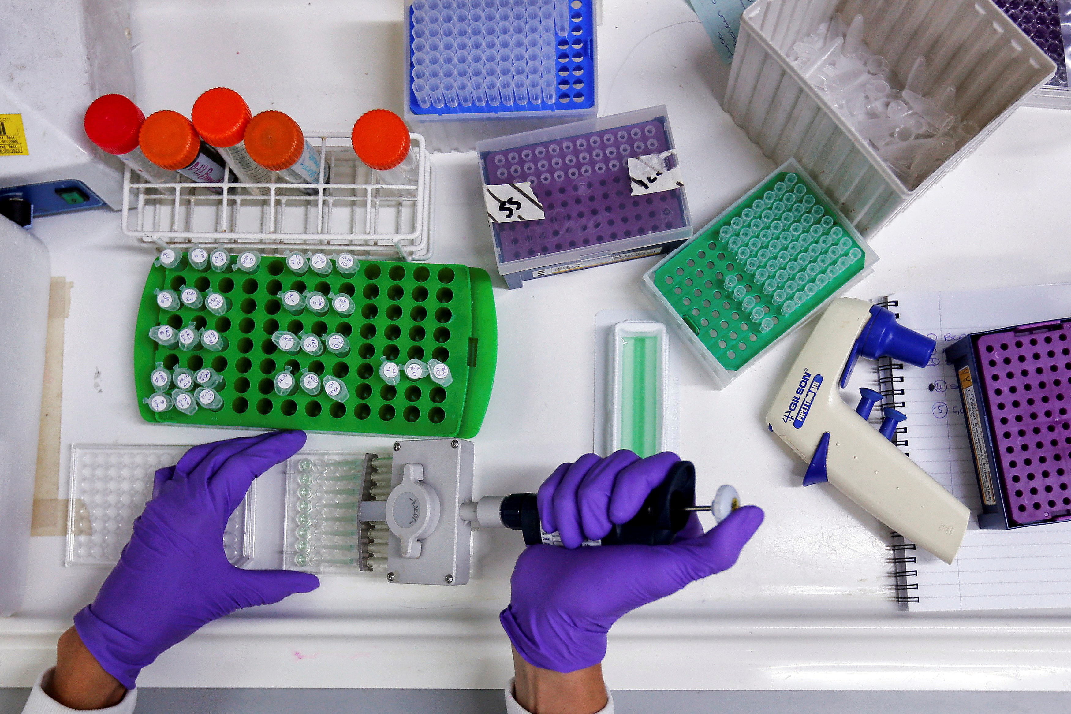FILE PHOTO: A scientist prepares protein samples for analysis in a lab at the Institute of Cancer Research in Sutton, July 15, 2013. REUTERS/Stefan Wermuth/File Photo