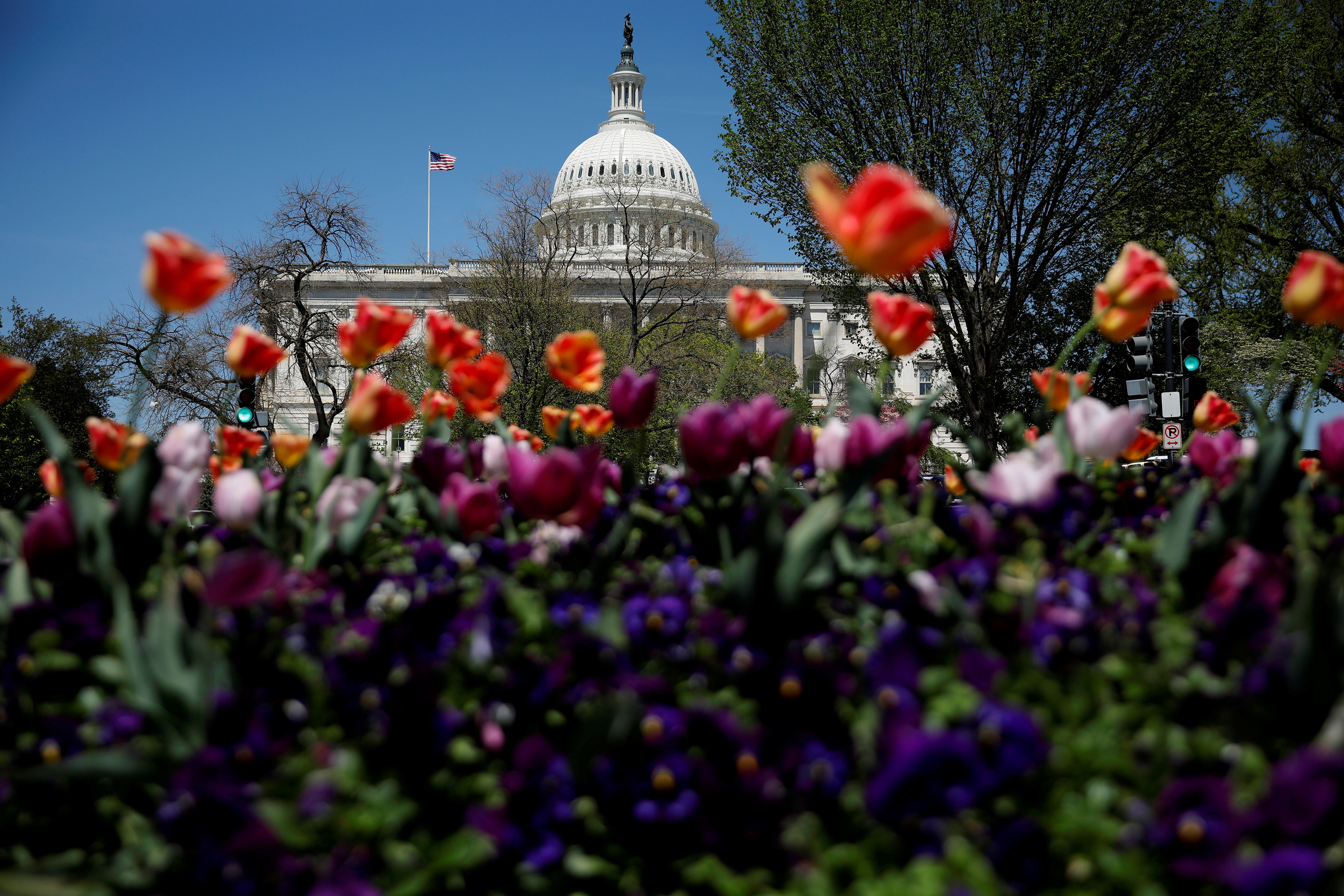 The Capitol dome is seen amongst blooming flowers in Washington, U.S., April 26, 2018. REUTERS/Aaron P. Bernstein
