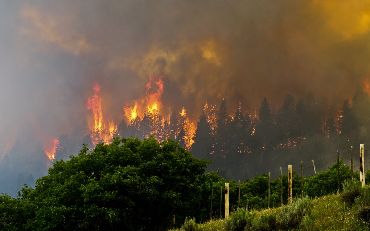 The 416 Fire near Durango, southern Colorado. REUTERS/Courtesy La Plata County, Colorado