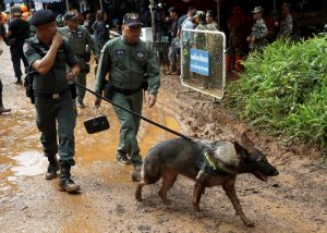 Soldiers walk with a dog near the Tham Luang cave complex, as a search for members of an under-16 soccer team and their coach continues, in the northern province of Chiang Rai, Thailand, June 29, 2018. REUTERS/Soe Zeya Tun