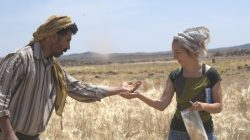 Amaia Arranz-Otaegui, a University of Copenhagen postdoctoral researcher in archaeobotany, and Ali Shakaiteer, a local assistant to researchers working at an archeological site in the Black Desert in northeastern Jordan, are seen collecting wheat in this image provided July 16, 2018. Joe Roe/Handout via REUTERS