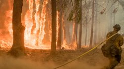FILE PHOTO: Firefighter fight fire near torching trees as wildfire burns near Yosemite National Park in this US Forest Service photo released on social media from California, U.S., August 6, 2018. Courtesy USFS/Yosemite National Park/Handout via REUTERS