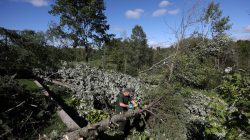 A man removes branches from a damaged tree after a tornado hit the Mont-Bleu neighbourhood in Gatineau, Quebec, Canada, September 22, 2018. REUTERS/Chris Wattie