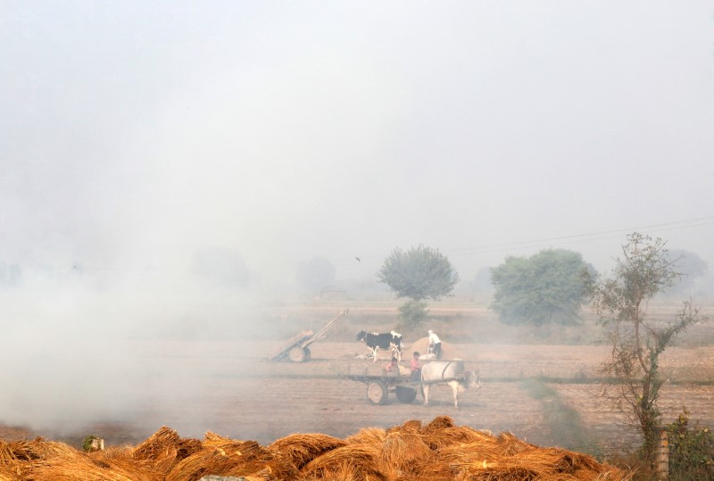 A boy rides a bullock cart as smoke billows from paddy waste stubble as it burns in a field near Jewar, in the northern state of Uttar Pradesh, India November 6, 2018. REUTERS/Altaf Hussain