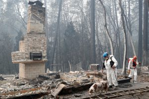 Trish Moutard (C), of Sacramento, searches for human remains with her cadaver dog, I.C., in a house destroyed by the Camp Fire in Paradise, California, U.S., November 14, 2018. REUTERS/Terray Sylvester