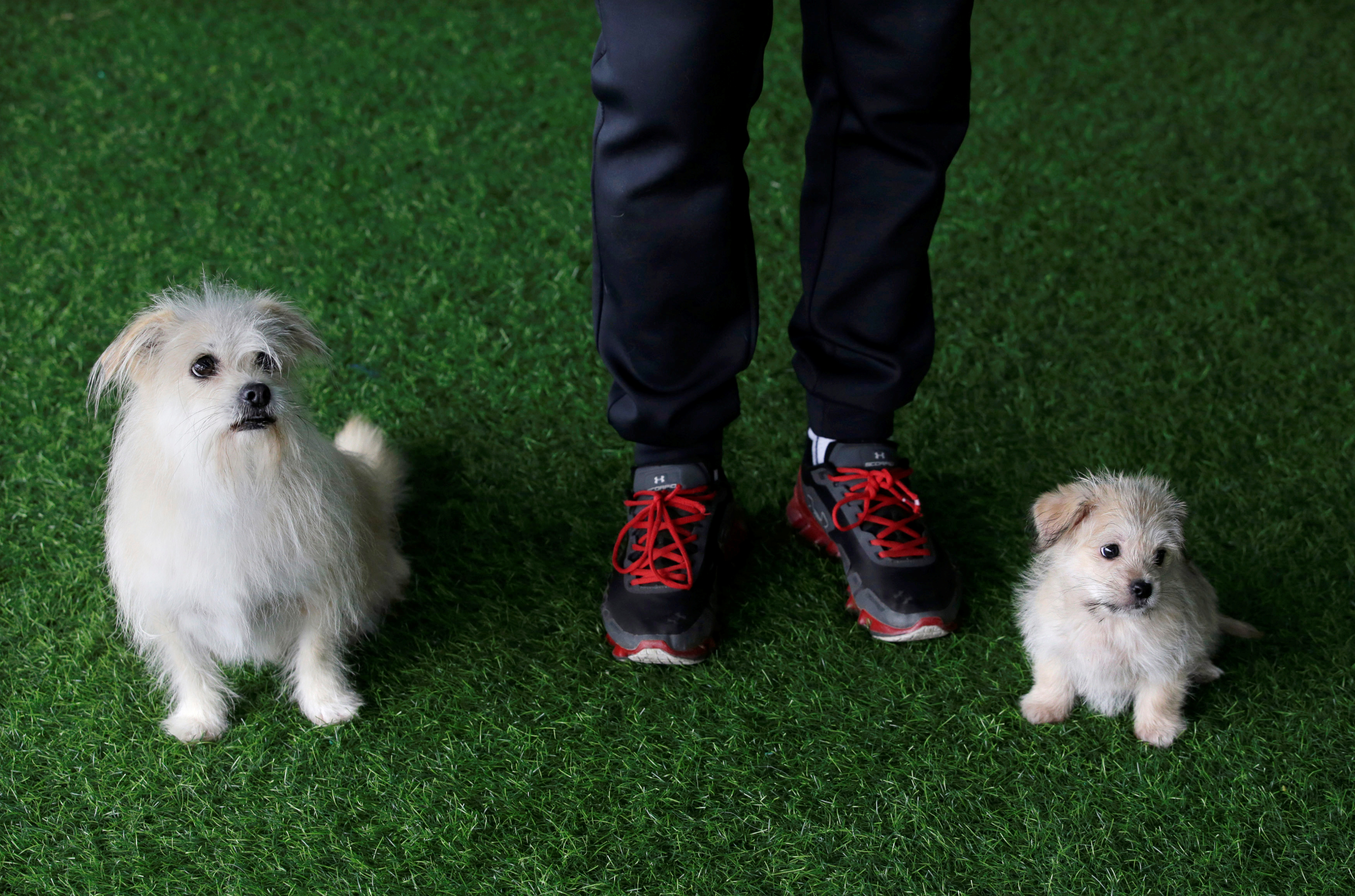 Owner He Jun poses with his dogs, nine-year-old Juice and its two-month-old clone, at his pet resort in Beijing, China November 26, 2018. Picture taken November 26, 2018. REUTERS/Jason Lee