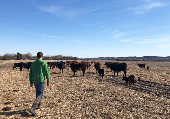 Justin Mensik, corn and soybean farmer, attends to his cattle at his farm in Morse Bluff, Nebraska, U.S. March 22, 2019. REUTERS/Humeyra Pamuk