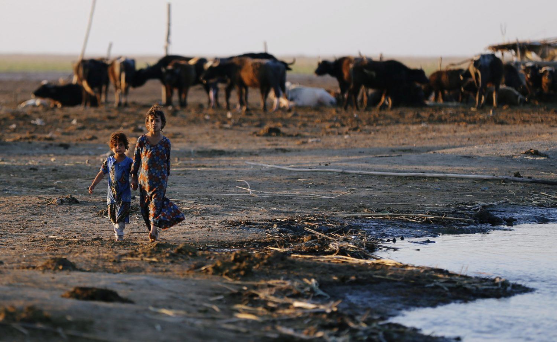 Iraqi Marsh Arab girls walk near buffaloes at the Chebayesh marsh in Dhi Qar province, Iraq April 13, 2019. REUTERS/Thaier al-Sudani