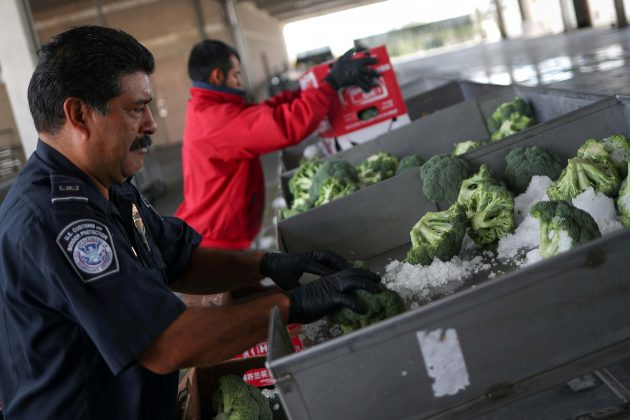 FILE PHOTO: Joe Alvarado, a U.S. Customs and Border Protection (CBP) Agriculture Specialist, checks imported broccoli from Mexico at the Pharr Port of Entry in Pharr, Texas, October 4, 2018. REUTERS/Adrees Latif/File Photo