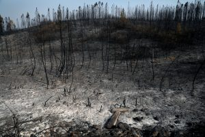 Trees are seen after a forest fire near the village of Cardigos, Portugal July 22, 2019. REUTERS/Rafael Marchante