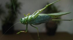 FILE PHOTO: A grasshopper lands on a window in Encinitas, California, U.S. October 29,2018. REUTERS/Mike Blake