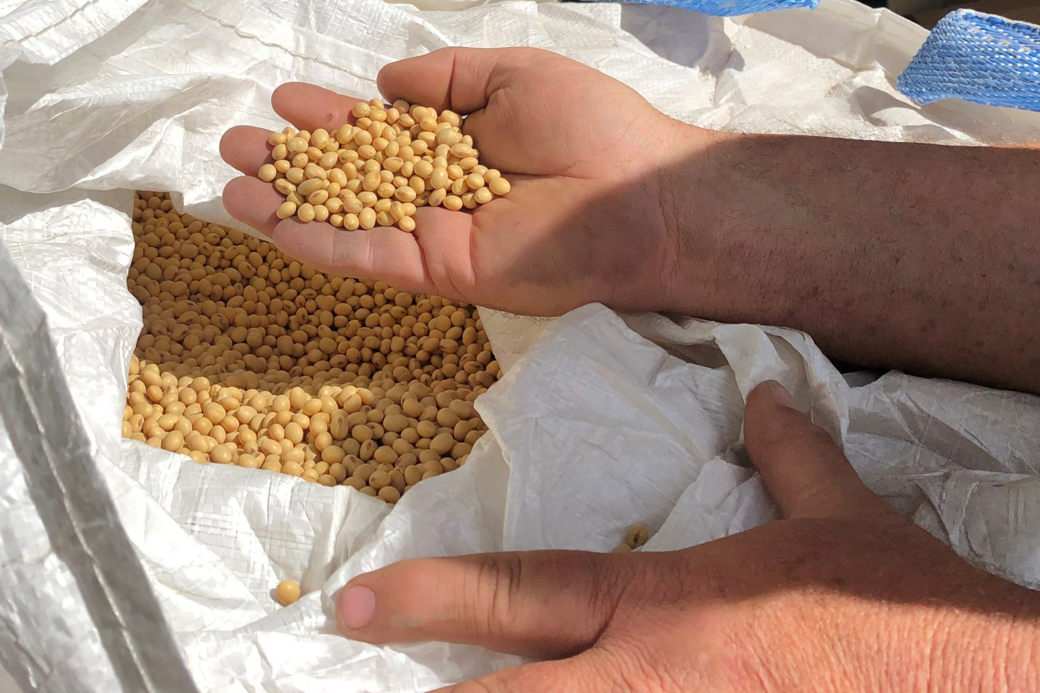 FILE PHOTO: Farmer Dave Walton holds soybeans in Wilton, Iowa, U.S. May 22, 2019. Picture taken May 22, 2019. REUTERS/Kia Johnson