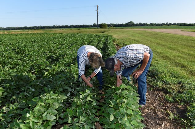 Paul and Vanessa Kummer check the soybeans on their farm near Colfax, North Dakota, U.S., August 6, 2019. REUTERS/Dan Koeck