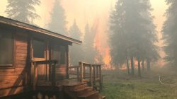 FILE PHOTO: Firefighters from the Chugach National Forest work to protect the Romig Cabin on Juneau Lake from the Swan Lake Fire near Cooper Landing, Alaska, U.S. in this August 28, 2019 handout photo. Chugach National Forest/Handout via