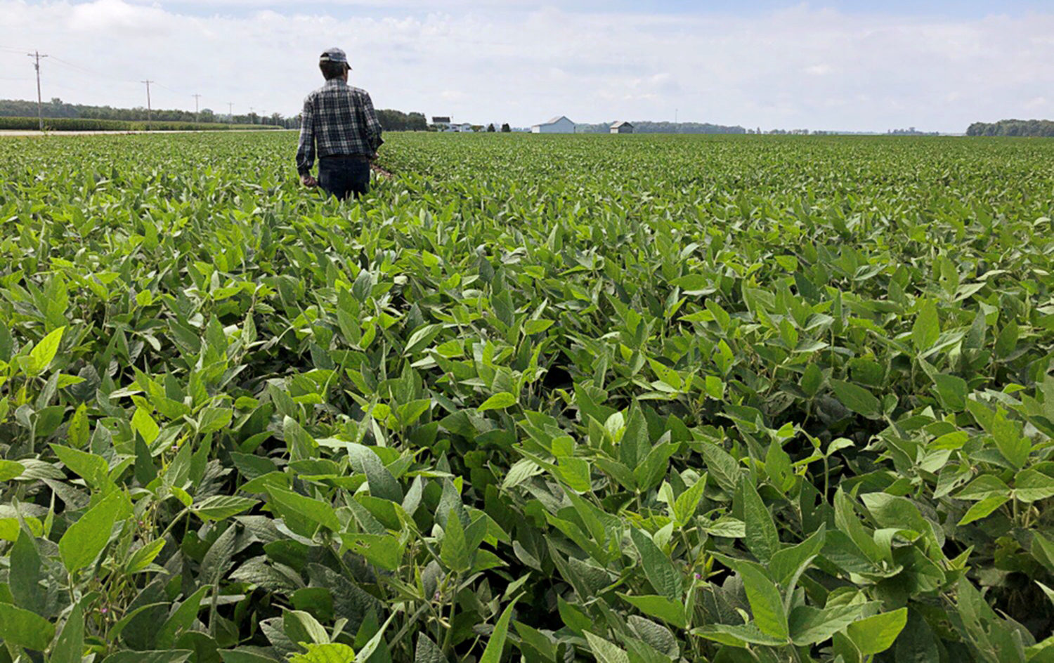 FILE PHOTO: A crop scout walks through a soybean field to check on crops during the Pro Farmer 2019 Midwest Crop Tour, in Allen County, Indiana, U.S., August 19, 2019. REUTERS/P.J. Huffstutter