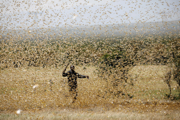 Running out of time: East Africa faces new locust threat ...